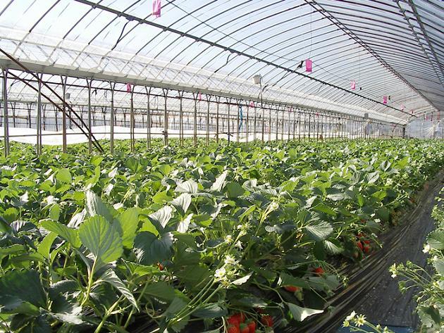 Co oprócz studni i ad blue znajdziemy w gospodarstwie rolnym?