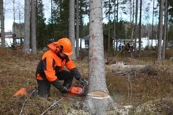 Polecane firmy od wycinki drzew