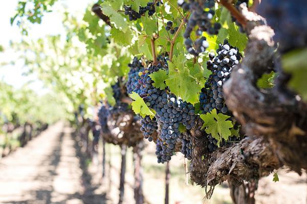 Popularna rodzinna winnica z agroturystyką