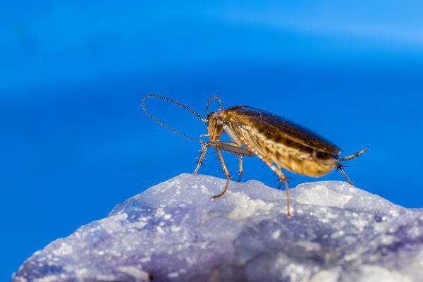 Efektywne usuwanie insektów z mieszkań
